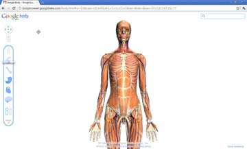 Google Body