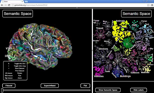 Pycortex WebGL fMRI brain viewer