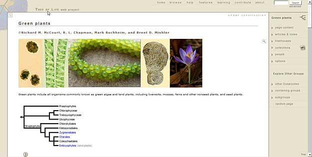 Sample web page of the Tree of Life