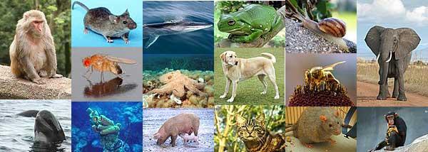 wikipedia animals
